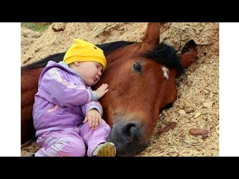 Cute Baby and Horse 🦄🦄🦄 Funny Baby and Animals Compilation