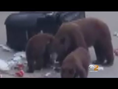 Bear-Sightings On The Rise In Monrovia