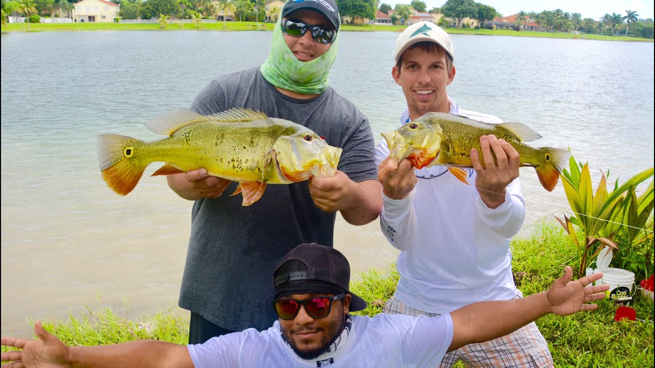 Peacock Bass Fishing In Florida Ft BlacktipH And Monster Mike