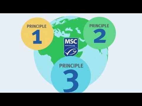 Sustainable seafood for the future: The three principles of the MSC Fisheries Standard