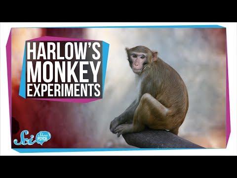 Harlow's Horrifying Monkey Experiments