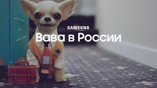 Вава в России