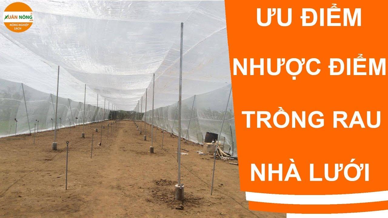Ưu nhược điểm khi trồng rau trong nhà lưới công nghệ mới