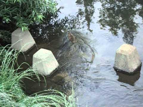 天白川 植田川 合流地点 魚釣りポイント 天白区  釣り   by 釣りポイント東海