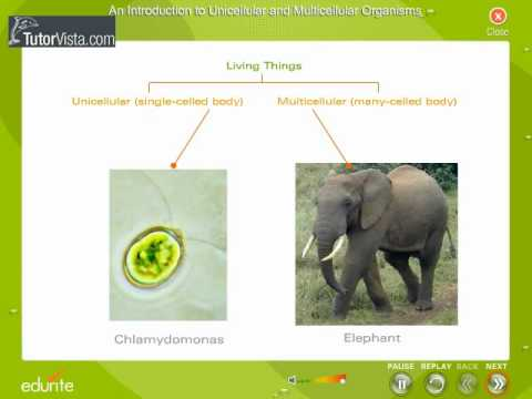 An Introduction To Unicellular And Multicellular Organisms