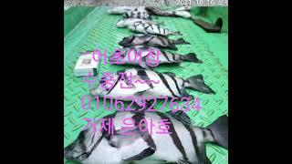 어초 어장 수중전 안전위해 조기철수#흘림찌낚시 #낚시 #낚시정보 #거제선상낚시 #거제도낚시 #거제감성돔낚시 …