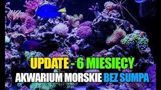 (58) Glossy Reef 200 - 6 miesięcy za nami - Akwarium morskie bez sumpa