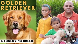 FUN Loving Dog Breed in The House || GOLDEN RETRIEVER PUPPY|| Cuteness Overloaded || BAADAL BHANDARI