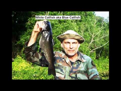 20 Fishes Of The Ocklawaha River Florida By Paul Nosca