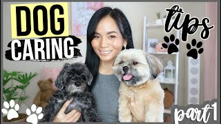 BEST WAYS TO TAKE CARE OF YOUR DOGS (Tips & Hacks)