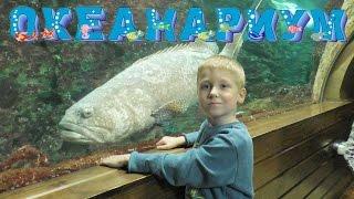 Воронежский Океанариум: Пингвины, Морские котики, Сурикаты, Рыбы! Учим животных Видео для детей