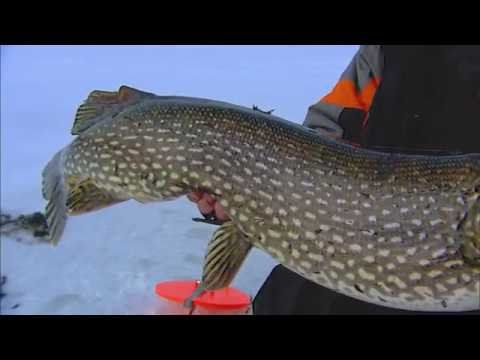 Tip-Up And Rigging Options For Pike