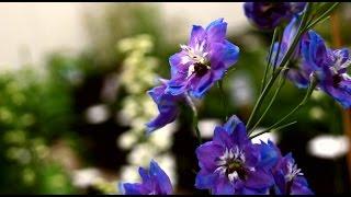 видео Растения для ландшафтного дизайна выбор растений
