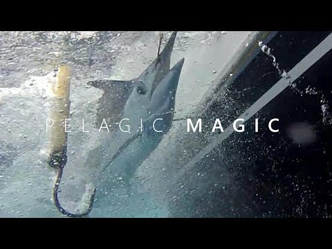Pelagic Magic (Hawaii Fishing)