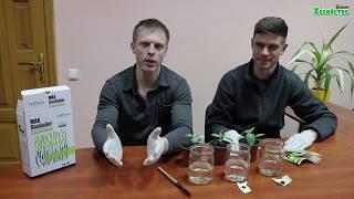 Сравниваем гумат калия и Maxsailer Аналог Альга 600 Подкормка перца