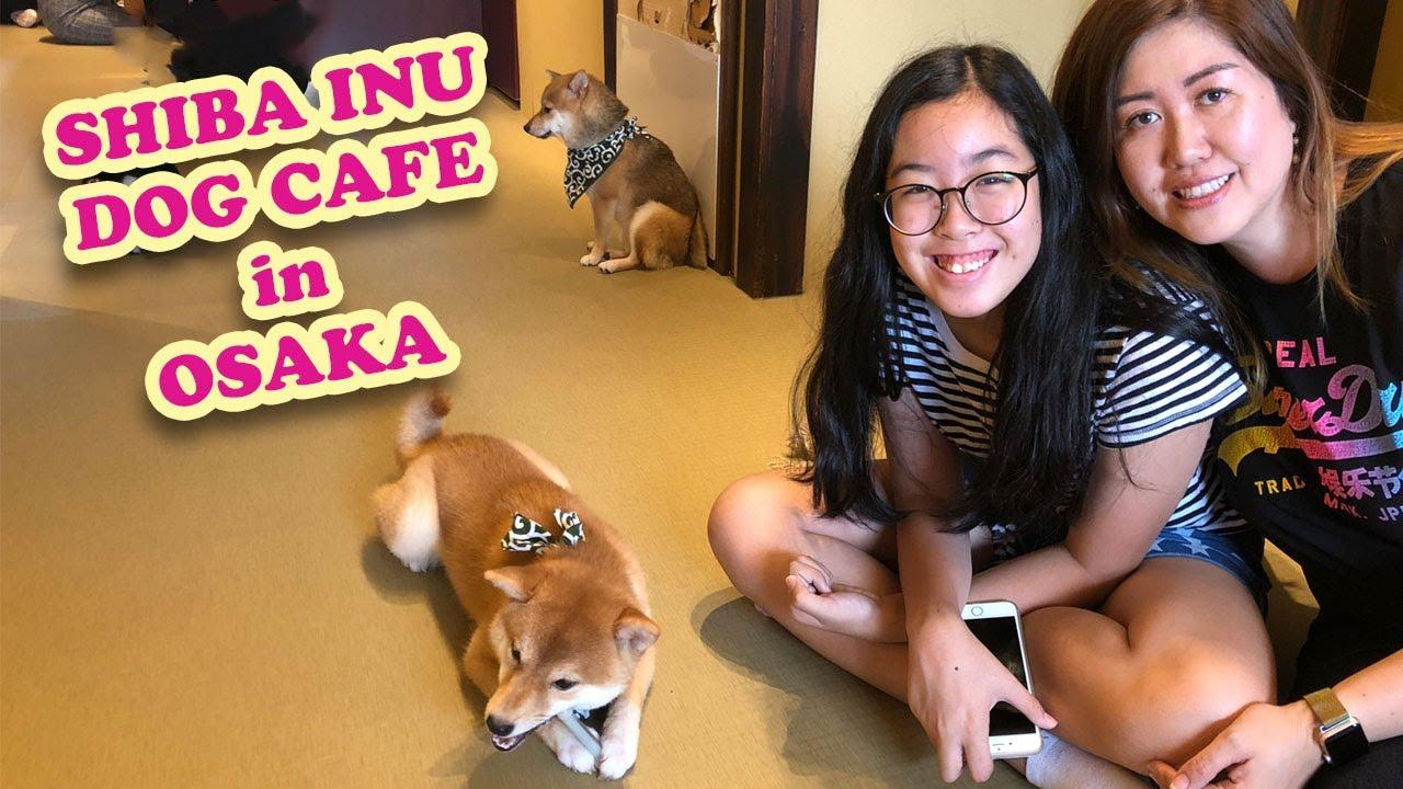 Shiba Inu Dog Cafe in Osaka