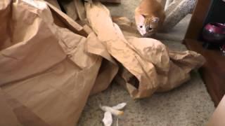 Подарок коту на день рождения   лабиринт из бумаги