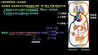 人體的循環系統--血液循環
