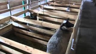 Aménagement parcs brebis et parcs agneaux