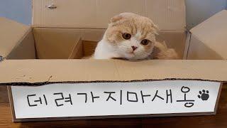 상자 속의 고양이