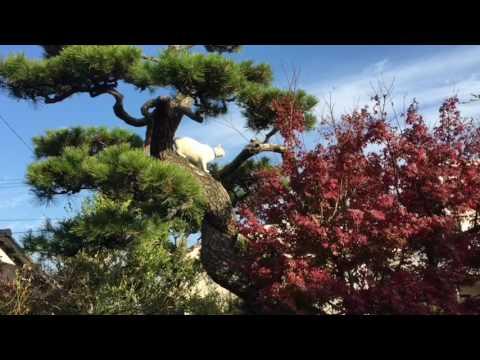 初めての木登り!