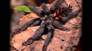top 10 colorful tarantula