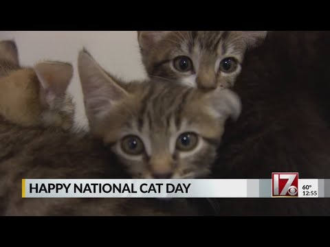 iHeartCountry Trending - Happy #NationalCatDay !