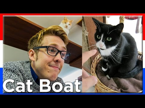 CAT BOAT! Amsterdam Day 1 | Evan Edinger Travel