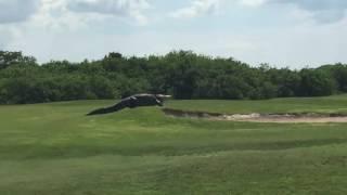 Огромный крокодил вышел гулять на полянку...