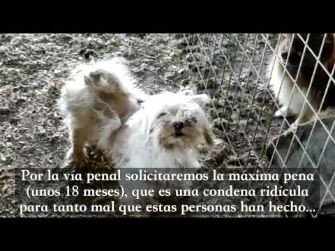 Protección Animal de Vegas del Genil (Granada) denuncia un criadero ilegal