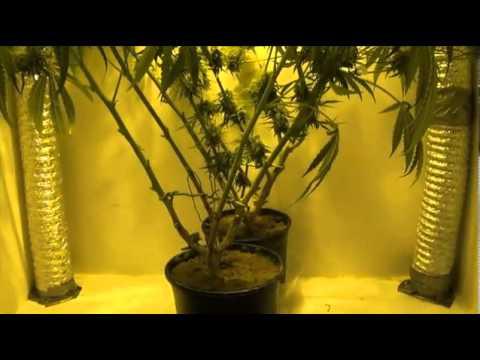 indoor closet grow growing marijuana indoors youtube. Black Bedroom Furniture Sets. Home Design Ideas