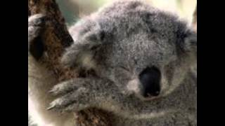 Le foto più dolci di Koala ♡