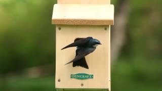 Duncraft's Swallow Bird House 2107.flv