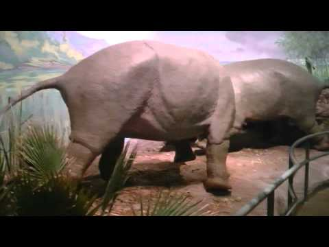 # 1 video en el  museo de utah