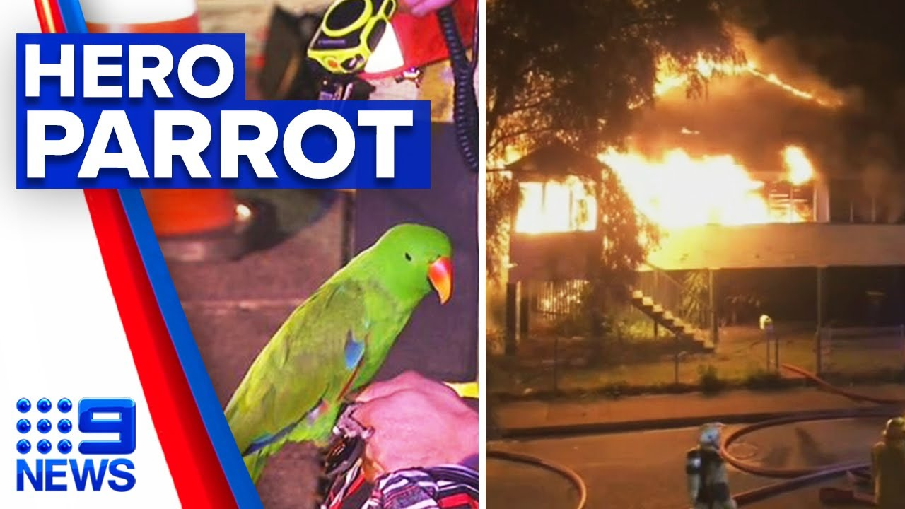 Pet Parrot Saves Sleeping Owner From Burning Home 9 News Australia Youtube