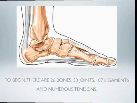 Foot Anatomy 101 (video and transcript)