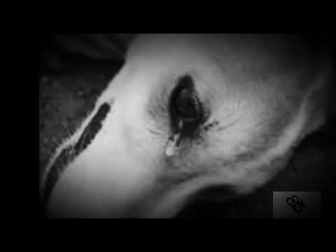 Bibi-Dansez cu inima ta (oficial audio)