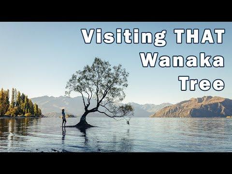 Photographing The Lone Tree on Lake Wanaka
