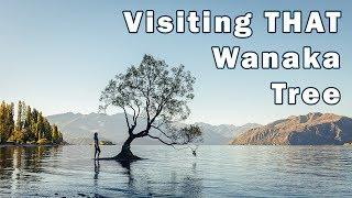 Visiting The Lone Tree on Lake Wanaka
