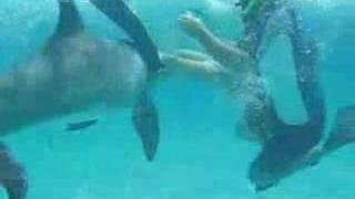 Frisky Dolphin