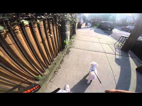 walking my dog again testing out gopro hero 3+ with velocity clip chest mount