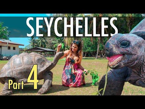 Dinosaur or Tortoise ?  - Seychelles Part 4 - Savvy Fernweh