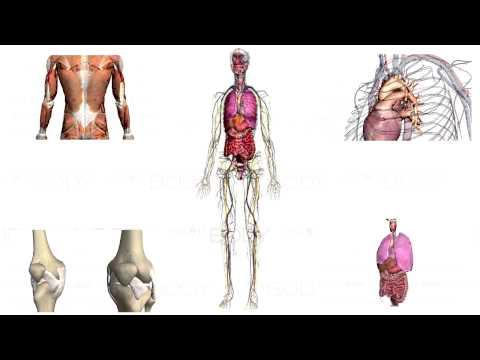Human Anatomy (Zygote Body) 3D АНАТОМИЯ ЧЕЛОВЕКА!