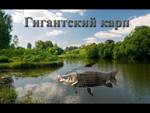 Русская Рыбалка 3.99 Гигантский карп