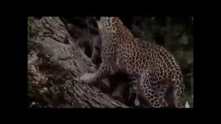 おもしろ動画集 - おもしろ - 最も驚くべき野生動物の攻撃#27 - 驚くほ...