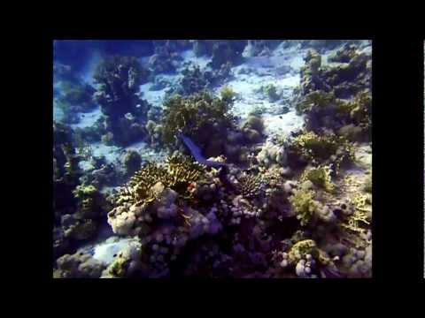 Diving with Easy Divers Sharm El Sheikh