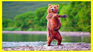 ЗАБАВНЫЕ ЖИВОТНЫЕ! Amusing Animals! Веселая Видео Подборка!