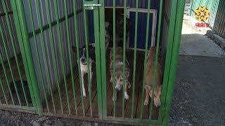 Ленинский районный суд пресек отлов и убийство бездомных собак.