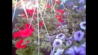 видео Цветоводство