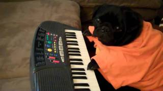 Play Him Off  Ralph The Pug Does Keyboard Dog